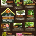 10-plants-that-should-not-be-nearby-a-house-11